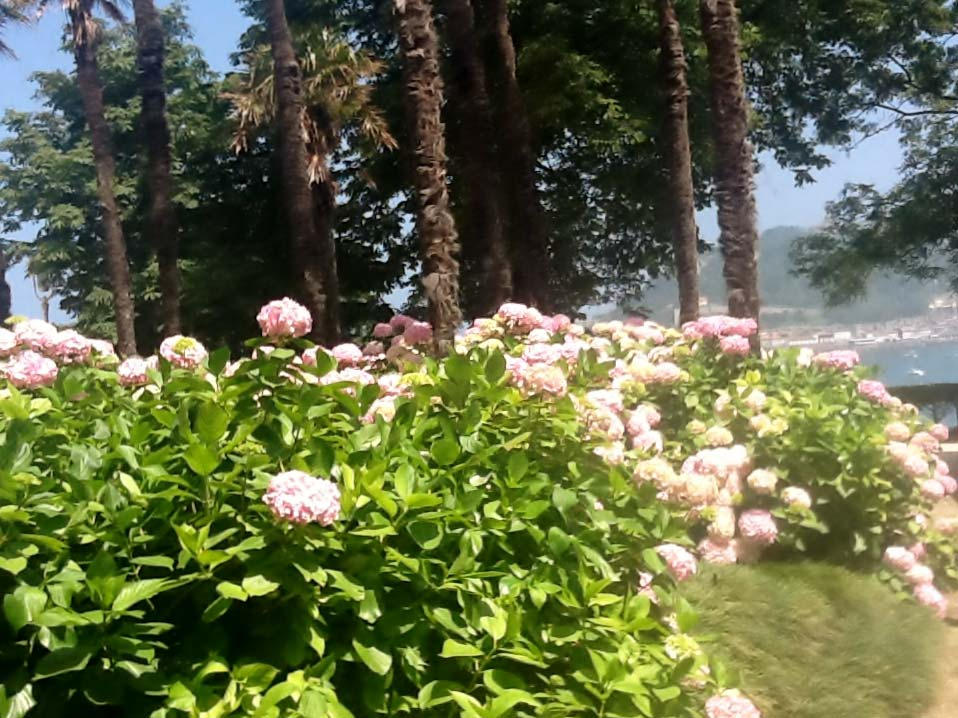 hortensias-palacio-miramar-donosti